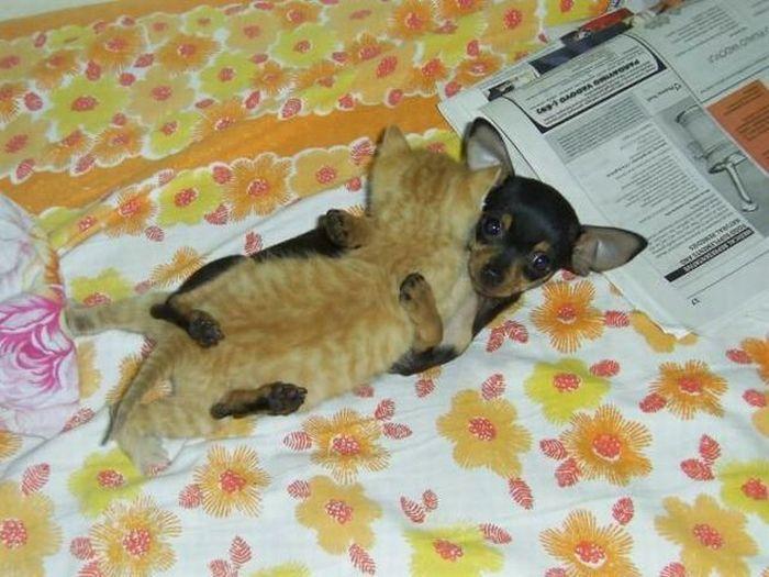 cat_and_dog_43.jpg