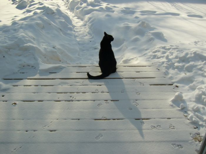 http://us.acidcow.com/pics/20091229/snow_cats_12.jpg